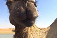 CamelFace
