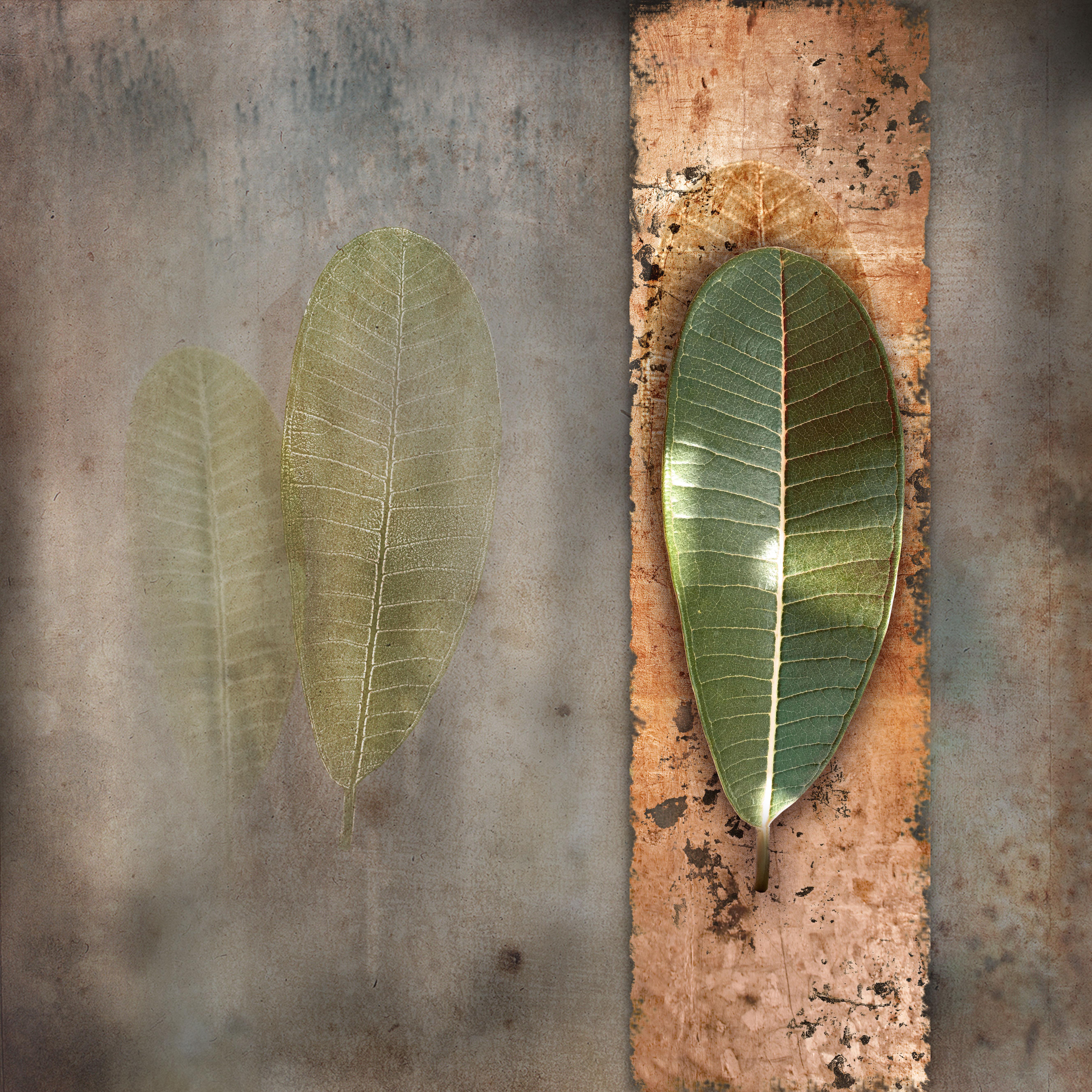 present leaf_01 copy