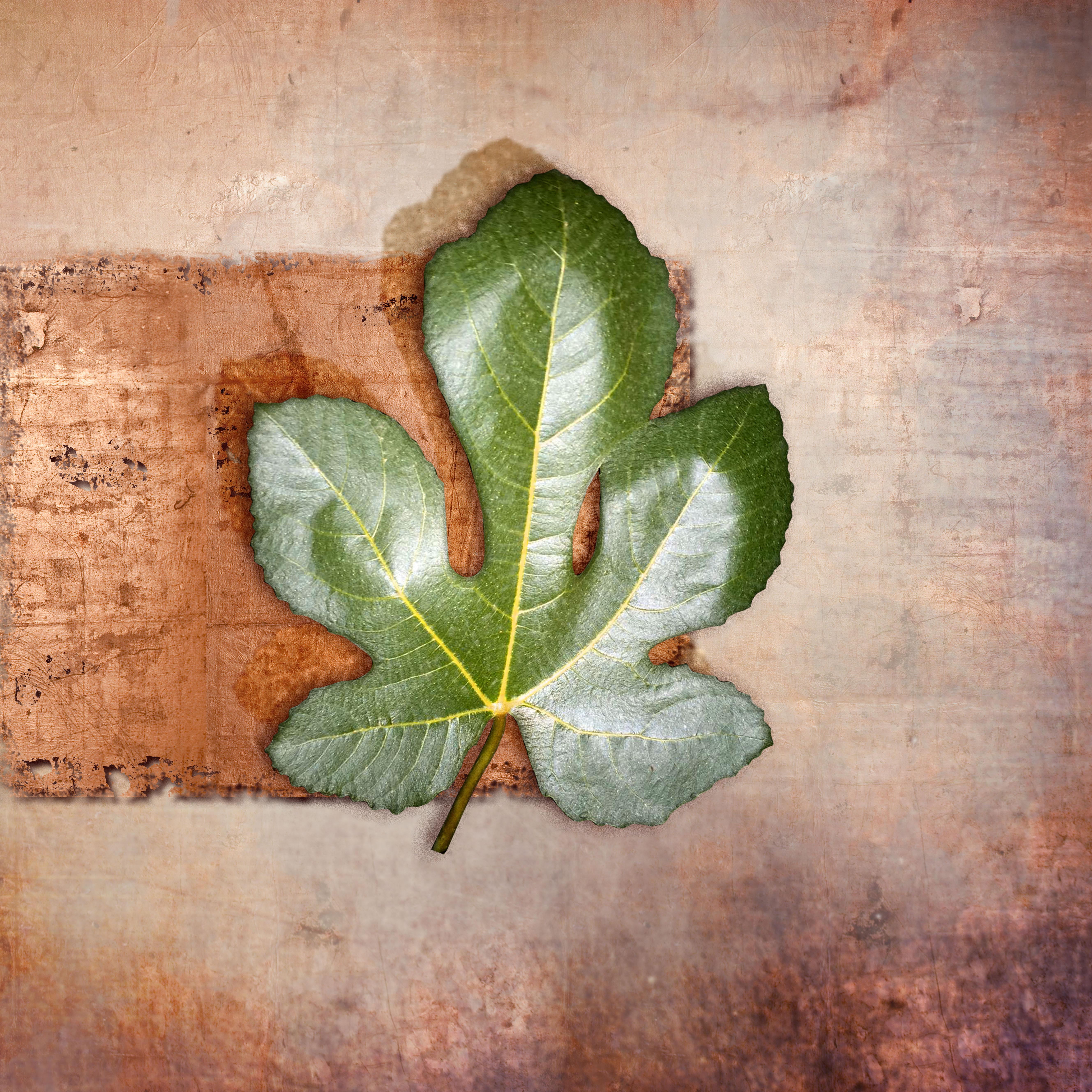 present leaf_02 copy