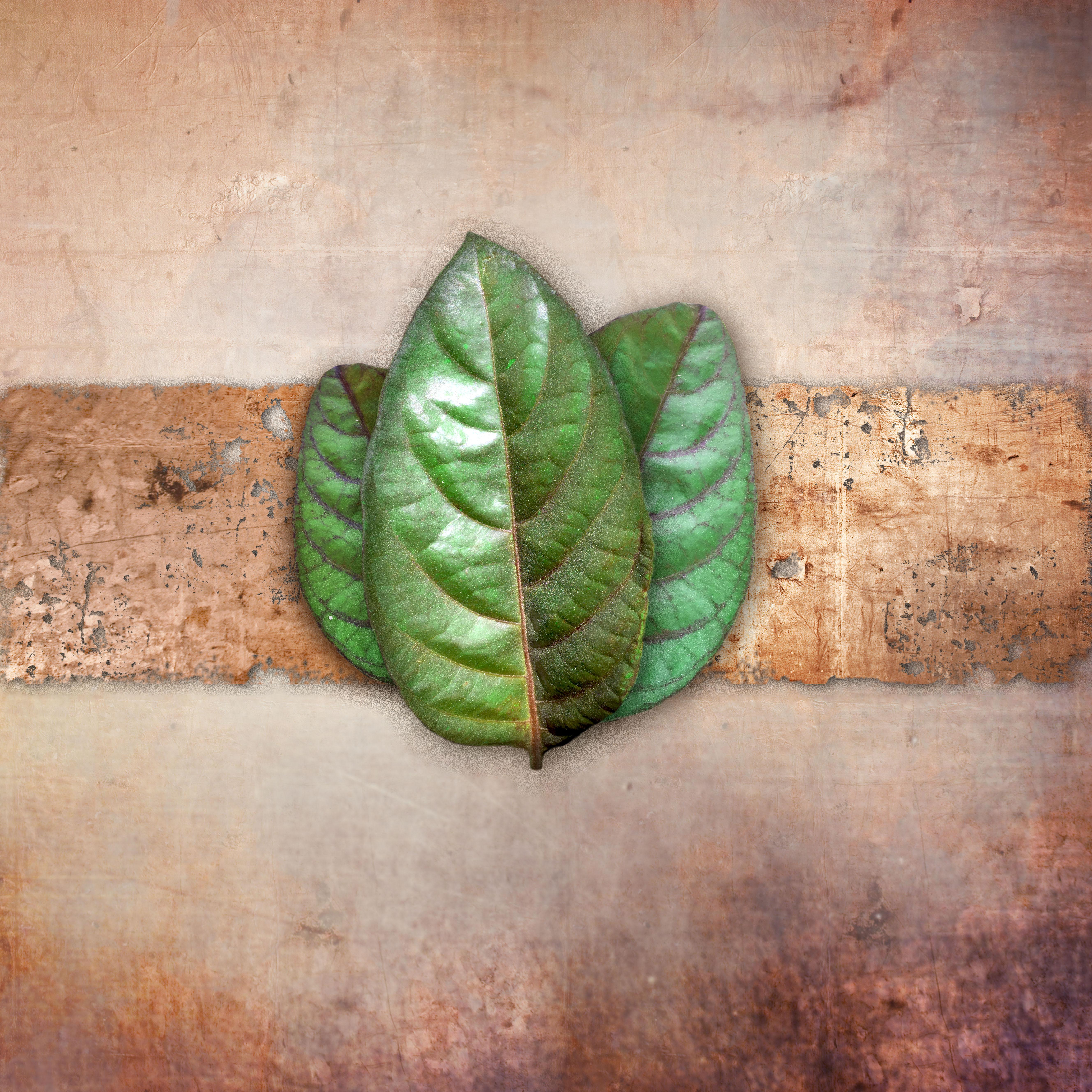 present leaf_04 copy