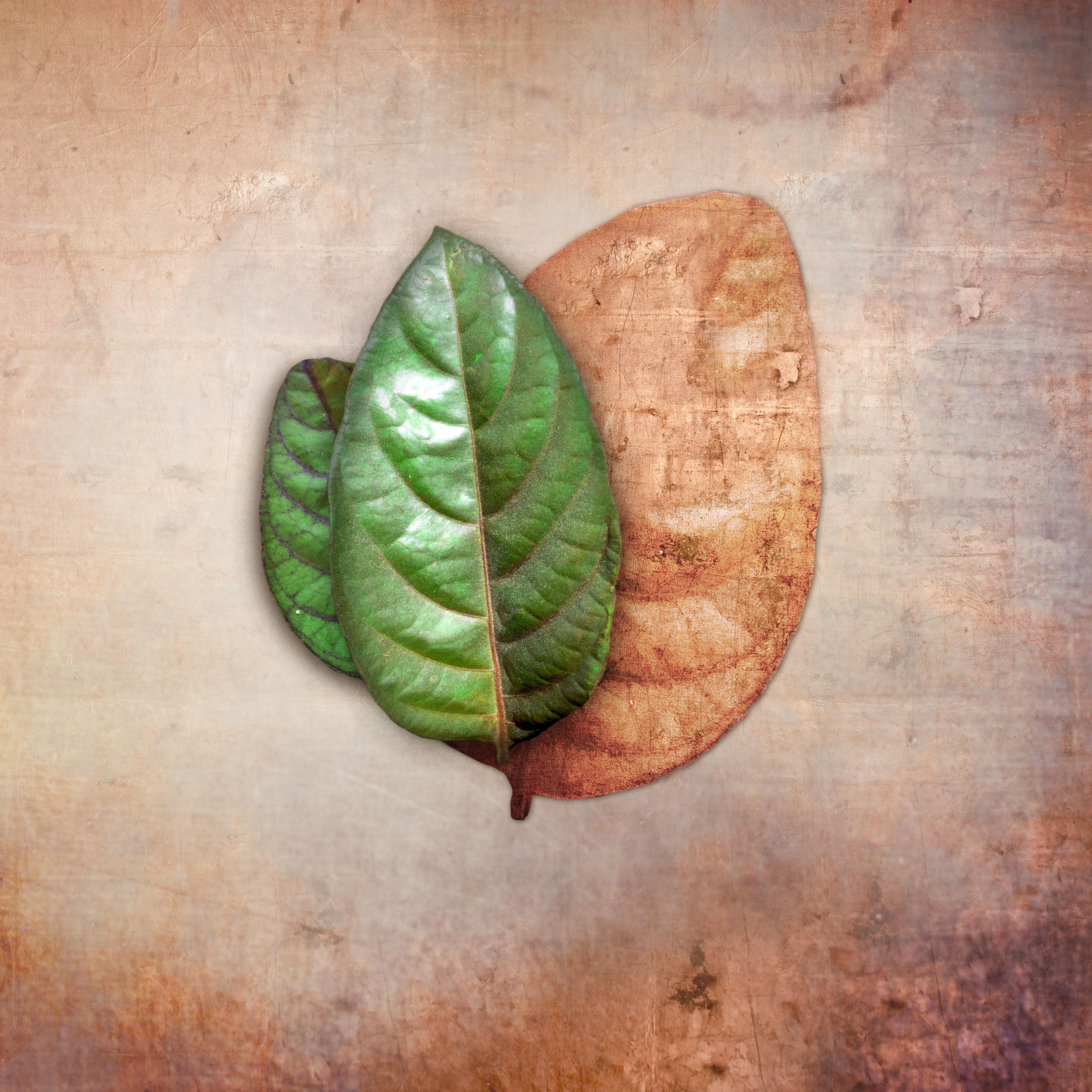 present leaf_05 copy